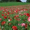 花儿还是那样的红 植物唯美图片