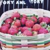 色彩鲜艳的草莓高清手机壁纸