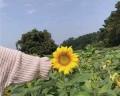2018微信头像风景或花草唯美 阳光一点的微信风景头像