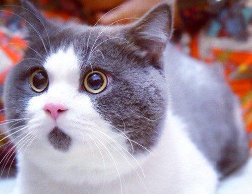 小猫咪可爱图片