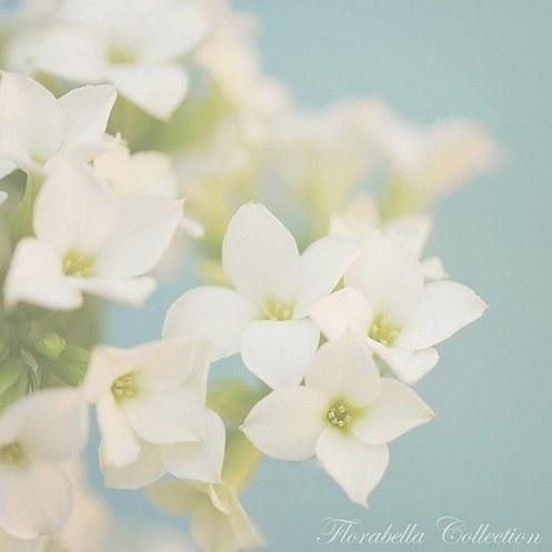 绝美的小清新花朵图片大全