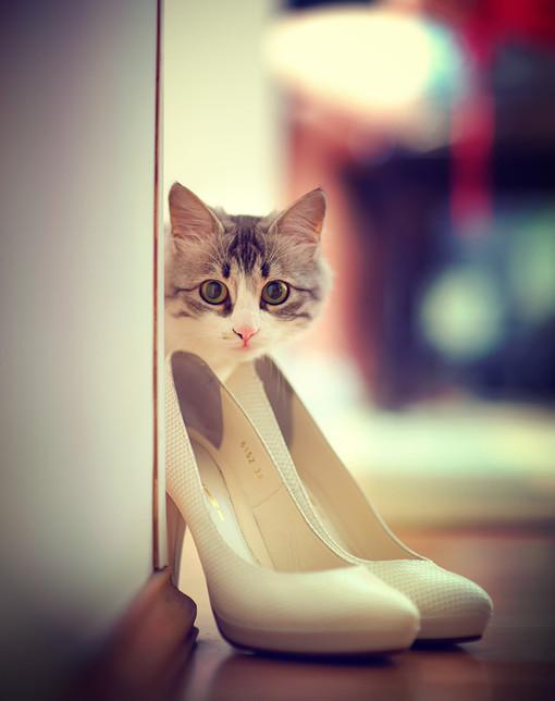 喵,你想穿高跟鞋嗎