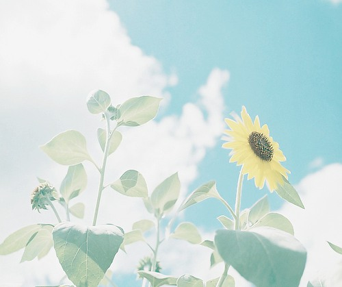 阳光小清新静物图片素材