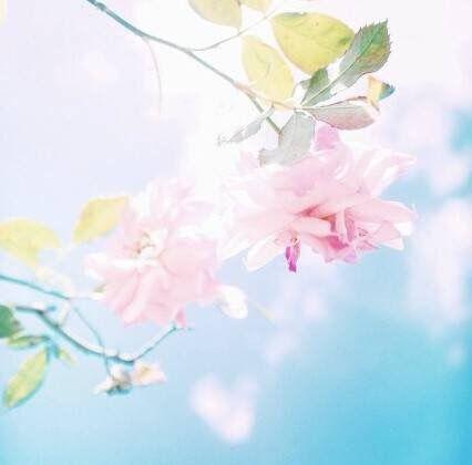 插画图片阳光下的花朵唯美小清新图片