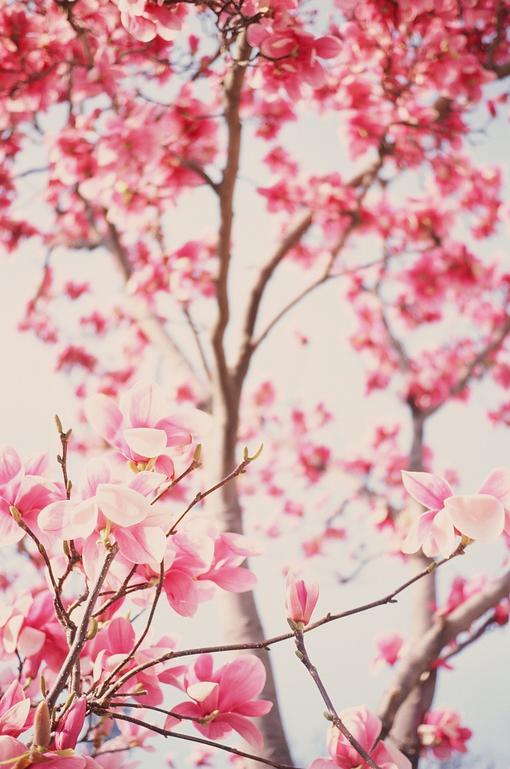 花朵壁纸iphone壁纸