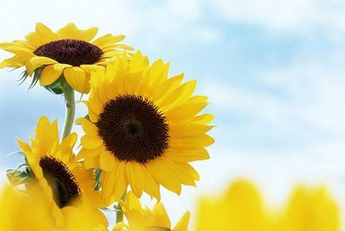 花的图片,有故事的花