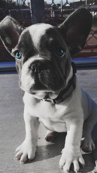 可爱狗狗壁纸,蠢萌可爱壁纸