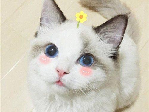可爱图片,呆萌小猫咪可爱图片