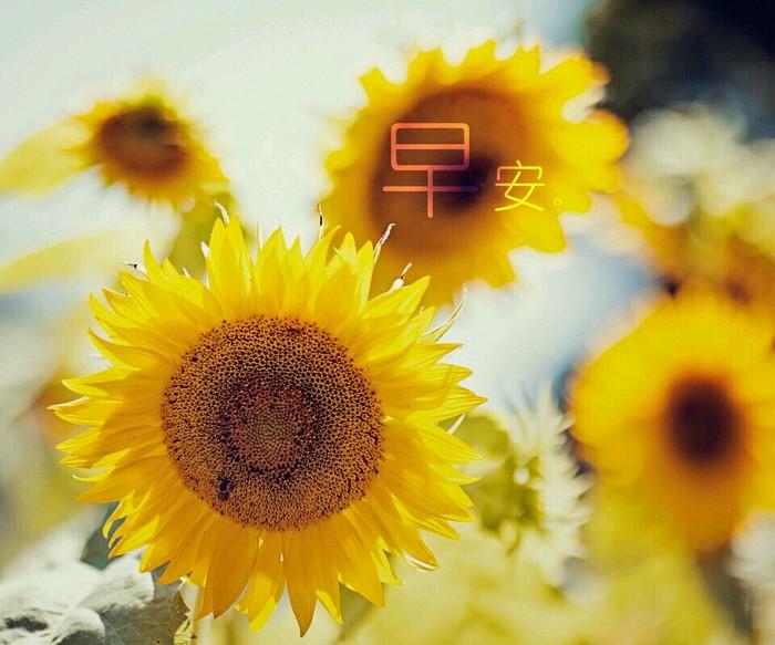 唯美幸福早安,唯美幸福早安图片,图片大全