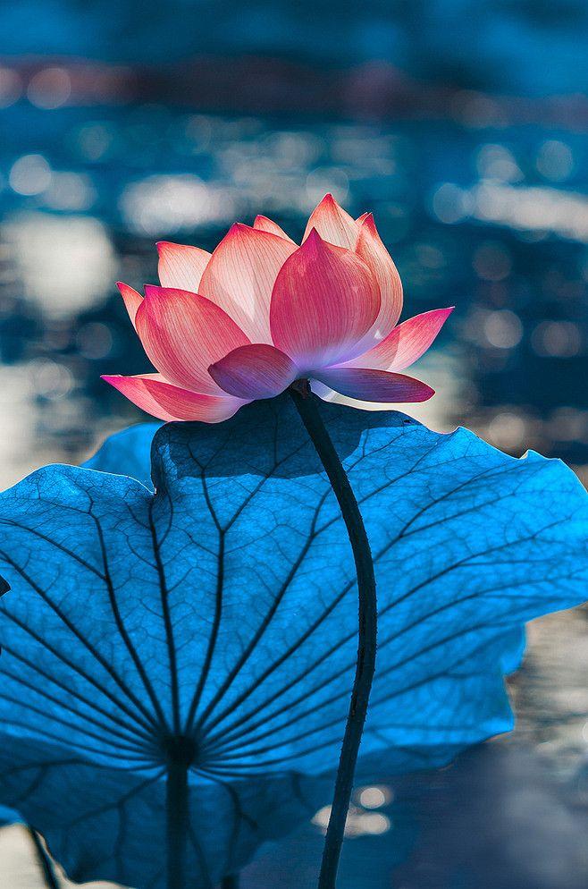 美景 我将心,藏在一朵花里,带着雨露的清新