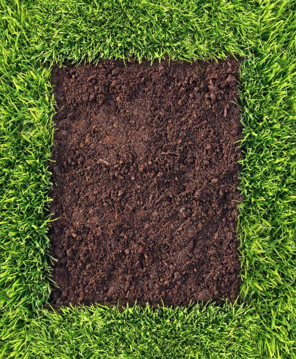 精美绿色自然植被素材,高清图片