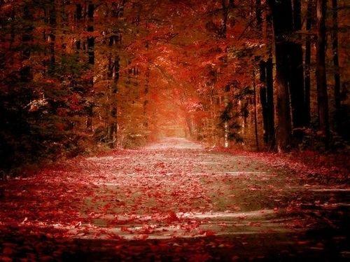 唯美图片:人生的路