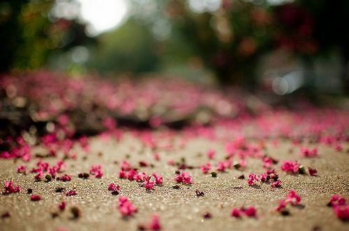 唯美文艺花朵意境图片