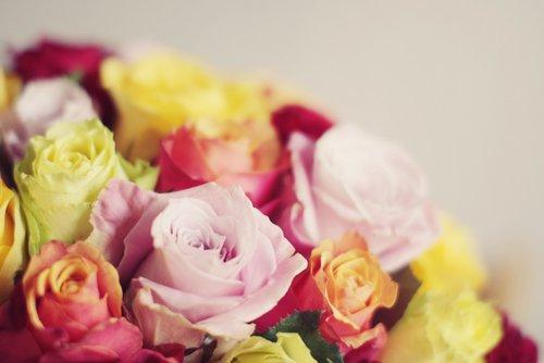 玫瑰花朵小清新唯美图片