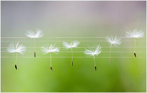 发现生活微小的美 唯美小清新小确幸静物图片