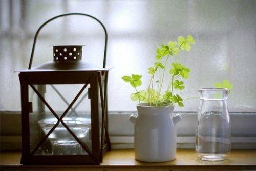 治愈系养眼绿植 唯美小清新绿植图片