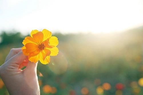 唯美了生命的诗行 小清新花卉图片