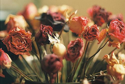 好看的花店玫瑰花唯美图片