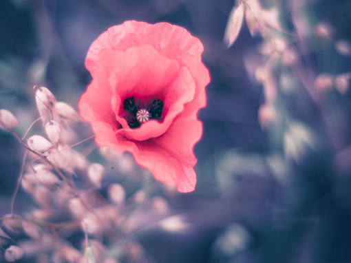 唯美安静美丽花儿图片