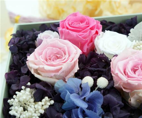 爱琴宣言,七彩爱情玫瑰图片