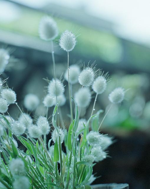 绿色图片素材,宁静的绿色植物