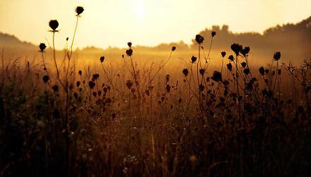 能陪你笑的人很多,能陪你走到最后的人又有多少