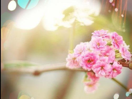 早安心语唯美长句 在失去中收获,在收获中失去