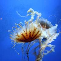 水母微信个性头像图片大全 被困在了海底无声无息