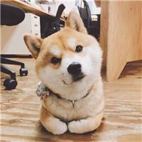 微信头像图片动物大全2017最新版 你喜欢猫还是狗