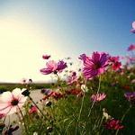 2017好看的微信风景头像清新自然 若问相思处花开花落时