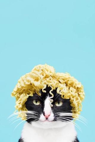创意猫咪搞笑安卓高清壁纸