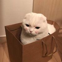 2017超萌的猫咪可爱微信头像大全 你讨厌我什么反正我也不改