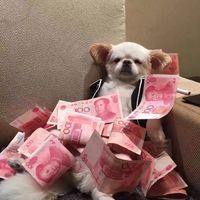 搞笑可爱的萌狗图片微信头像大全 全世界就你最可爱了