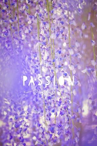 唯美紫色花卉梦幻手机壁纸