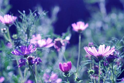 期待春暖花开