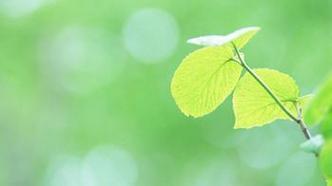 小清新花卉植物系列微信唯美头像图片