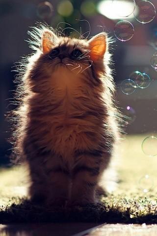 可爱猫咪手机图片壁纸