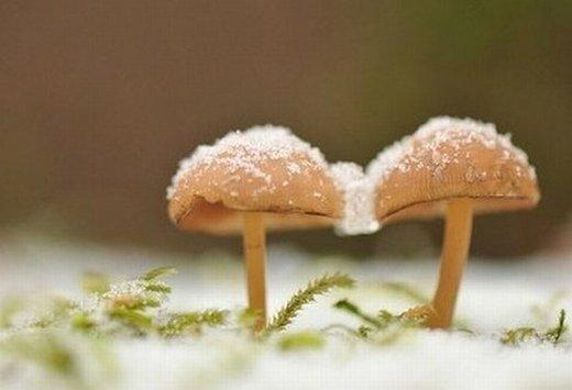 蘑菇意境图片_以前的烦恼 请你忘了吧