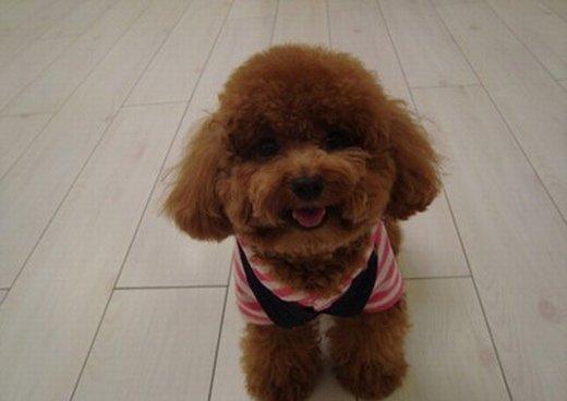 最萌的狗_能带给你开心就是我最大的快乐