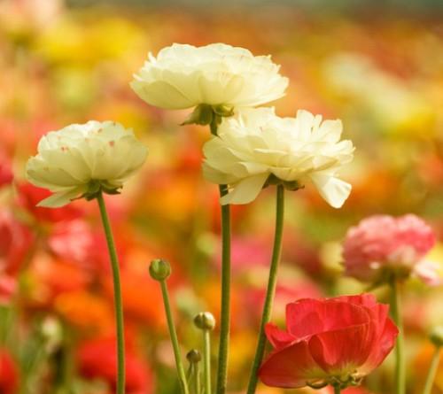 活成自己喜欢的样子 鲜花唯美图片