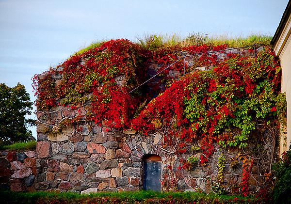 偶尔要回头看看 秋天风景唯美图片