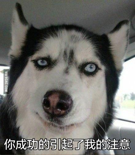 单身狗图片,单身狗素材图片,单身狗表情包.jpg