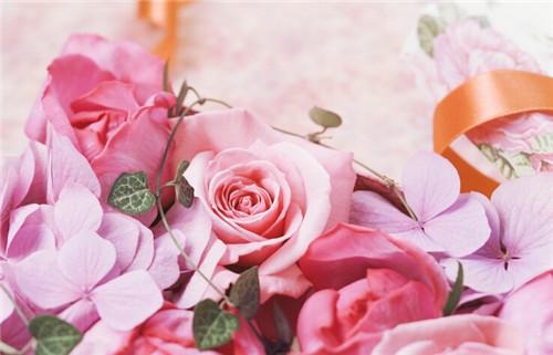 玫瑰花花海图片大全
