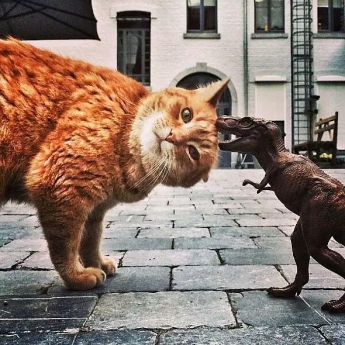 可爱猫猫头像,可做微信头像