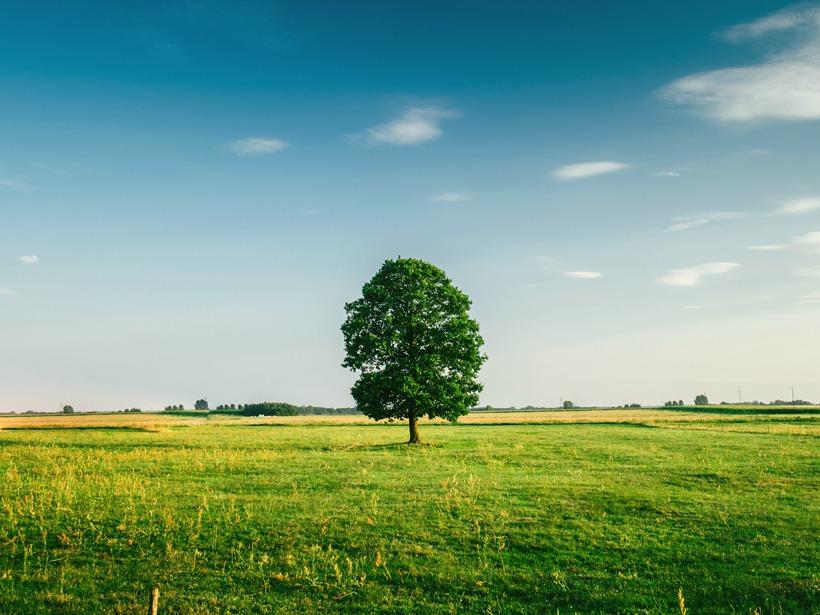 小清新绿色大树美图图片