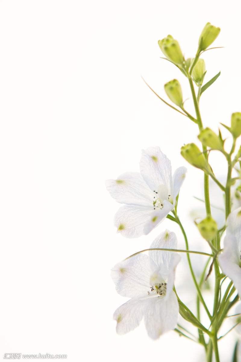 鲜花素材,鲜花图片,鲜花下载