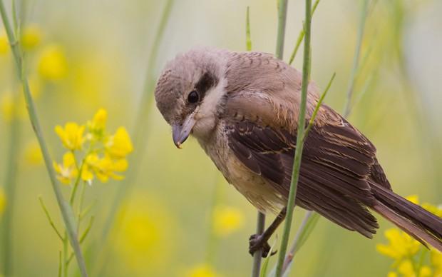 可爱的野外鸟儿图片,可爱鸟图片素材
