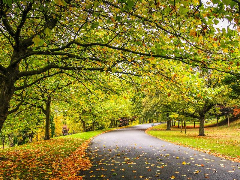 优美的林间小道,林间小道唯美图片素材