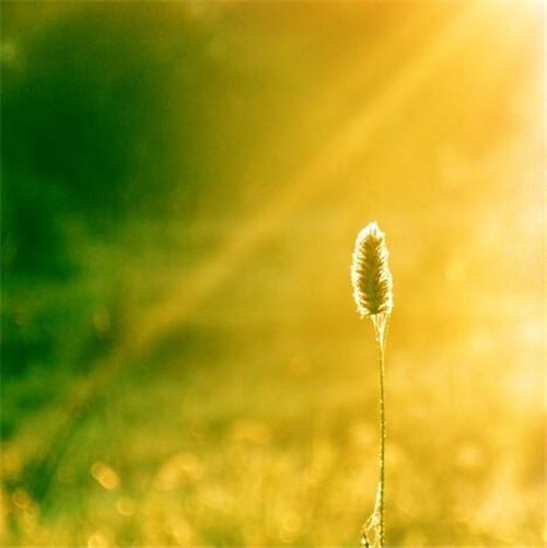 阳光明媚的早晨图片,唯美早安图片素材