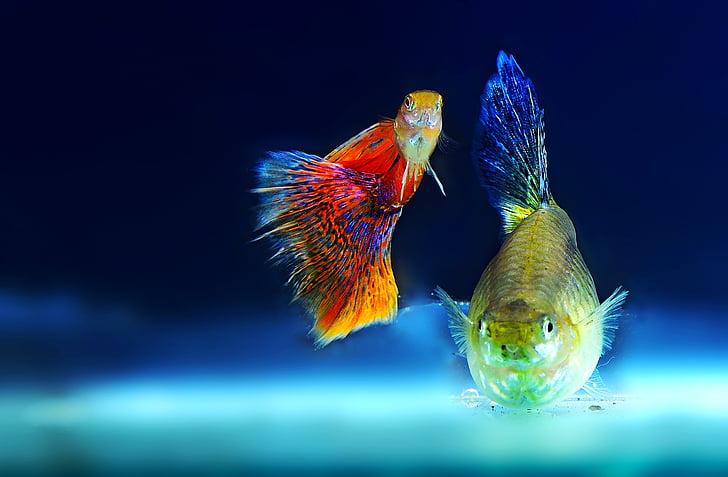 神奇的海底鱼,漂亮的鱼的图片